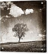 Solitary Tree In Limagne Landscape. Auvergne. France Acrylic Print by Bernard Jaubert