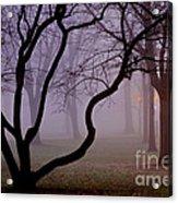 Solitudes Glow Acrylic Print