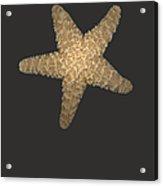 Solo Starfish I Acrylic Print