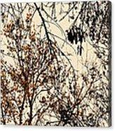 Soltice Di Amore Acrylic Print