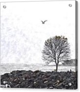 Somber Flight Wc Acrylic Print