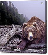 Some Days You Eat The Bear Some Days The Bear Eats You Acrylic Print