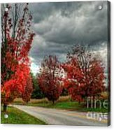 Some Fall Colors Acrylic Print