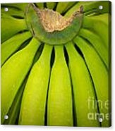 Some Fresh Green Bananas On A Street Fair In Brazil Acrylic Print