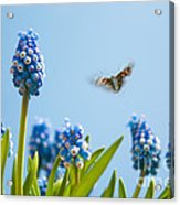 Something In The Air Acrylic Print by John Edwards