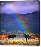 Somewhere Over The Rainbow Acrylic Print by Jeanne  Bencich-Nations