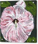 Son Of A Flower Acrylic Print