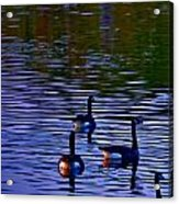 Song Of Geese Acrylic Print