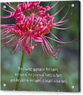 Song Of Solomon - The Flowers Appear Acrylic Print