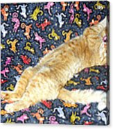 Sonny Cat On Sacred Cat Quilt Acrylic Print