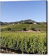Sonoma County Vineyards Acrylic Print