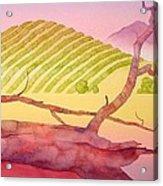 Sonoma Acrylic Print by Robert Hooper
