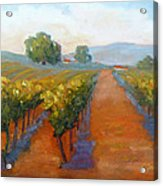 Sonoma Vineyard Acrylic Print by Carolyn Jarvis