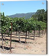 Sonoma Vineyards In The Sonoma California Wine Country 5d24492 Acrylic Print