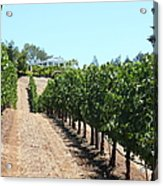 Sonoma Vineyards In The Sonoma California Wine Country 5d24507 Acrylic Print