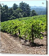 Sonoma Vineyards In The Sonoma California Wine Country 5d24512 Acrylic Print