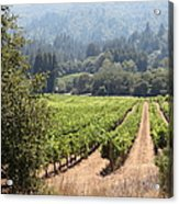 Sonoma Vineyards In The Sonoma California Wine Country 5d24515 Square Acrylic Print