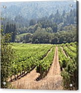 Sonoma Vineyards In The Sonoma California Wine Country 5d24515 Acrylic Print