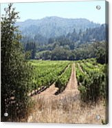 Sonoma Vineyards In The Sonoma California Wine Country 5d24516 Acrylic Print