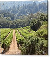 Sonoma Vineyards In The Sonoma California Wine Country 5d24518 Acrylic Print