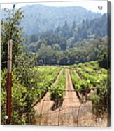 Sonoma Vineyards In The Sonoma California Wine Country 5d24521 Acrylic Print