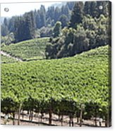 Sonoma Vineyards In The Sonoma California Wine Country 5d24539 Acrylic Print