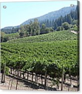 Sonoma Vineyards In The Sonoma California Wine Country 5d24541 Acrylic Print