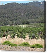 Sonoma Vineyards In The Sonoma California Wine Country 5d24602 Acrylic Print