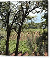 Sonoma Vineyards In The Sonoma California Wine Country 5d24622 Acrylic Print