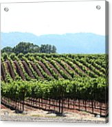 Sonoma Vineyards In The Sonoma California Wine Country 5d24625 Acrylic Print