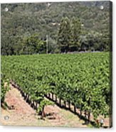 Sonoma Vineyards In The Sonoma California Wine Country 5d24632 Acrylic Print