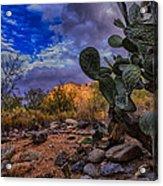 Sonoran Desert 54 Acrylic Print