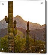 Sonoran Desert II Acrylic Print by Robert Bales