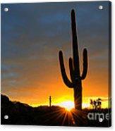 Sonoran Desert Sunrise 4 Acrylic Print