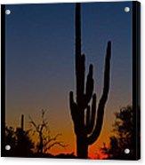 Sonoran Desert Sunrise Poster Print Acrylic Print