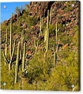 Sonoran Desert West Saguaro National Park Acrylic Print