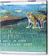 Soon Only In Zoos  Their Land Lost Acrylic Print