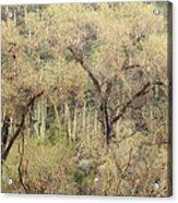 Soothing Desert Acrylic Print