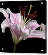 Sorbonne Lily-0002 Acrylic Print