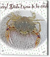 Sorry I Was Crabby Greeting Card - Calico Crab Acrylic Print
