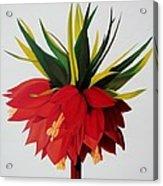 Sotogrande Acrylic Print