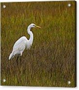Soundside Park Topsail Island Egret Acrylic Print