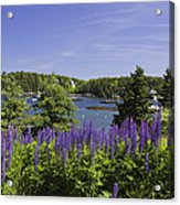 South Bristol And Lupine Flowers On The Coast Of Maine Acrylic Print