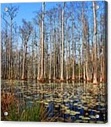 South Carolina Swamps Acrylic Print