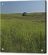 South Dakota Homestead Acrylic Print