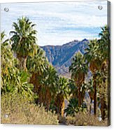 South Side View Of Andreas Canyon Trail In Indian Canyons-ca Acrylic Print