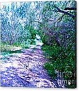 South Texas Brushlands Acrylic Print