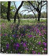 South Texas Meadow Acrylic Print
