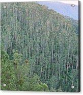Southeast Forest Ridges Acrylic Print