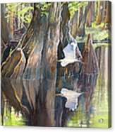 Southeast Missouri Swamp Acrylic Print